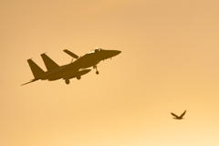 F-15Eagle&Great Cormorant.