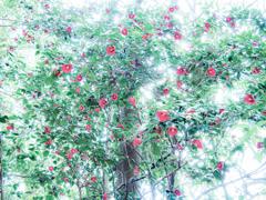椿がいっぱい咲いている
