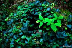 緑に覆われた切り株