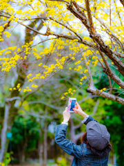 黄色い花を撮る人