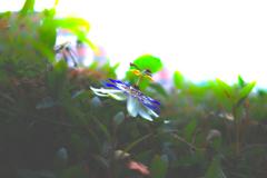 時が止まる花