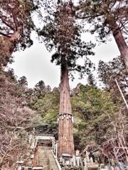 三本の巨大な御神木