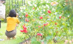 薔薇を撮る人