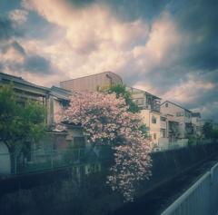 桜が撮りたかった