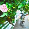 小径に咲く花美しく