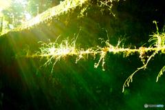 光を浴びる雑草
