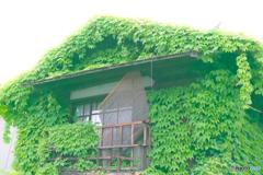 モコモコグリーンハウス