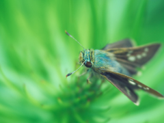 かわいい蛾が人気があるってテレビで言ってた