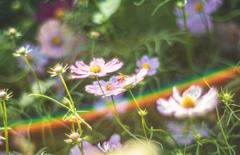 架かる虹と花と蜂と