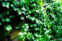 緑に覆われた石垣