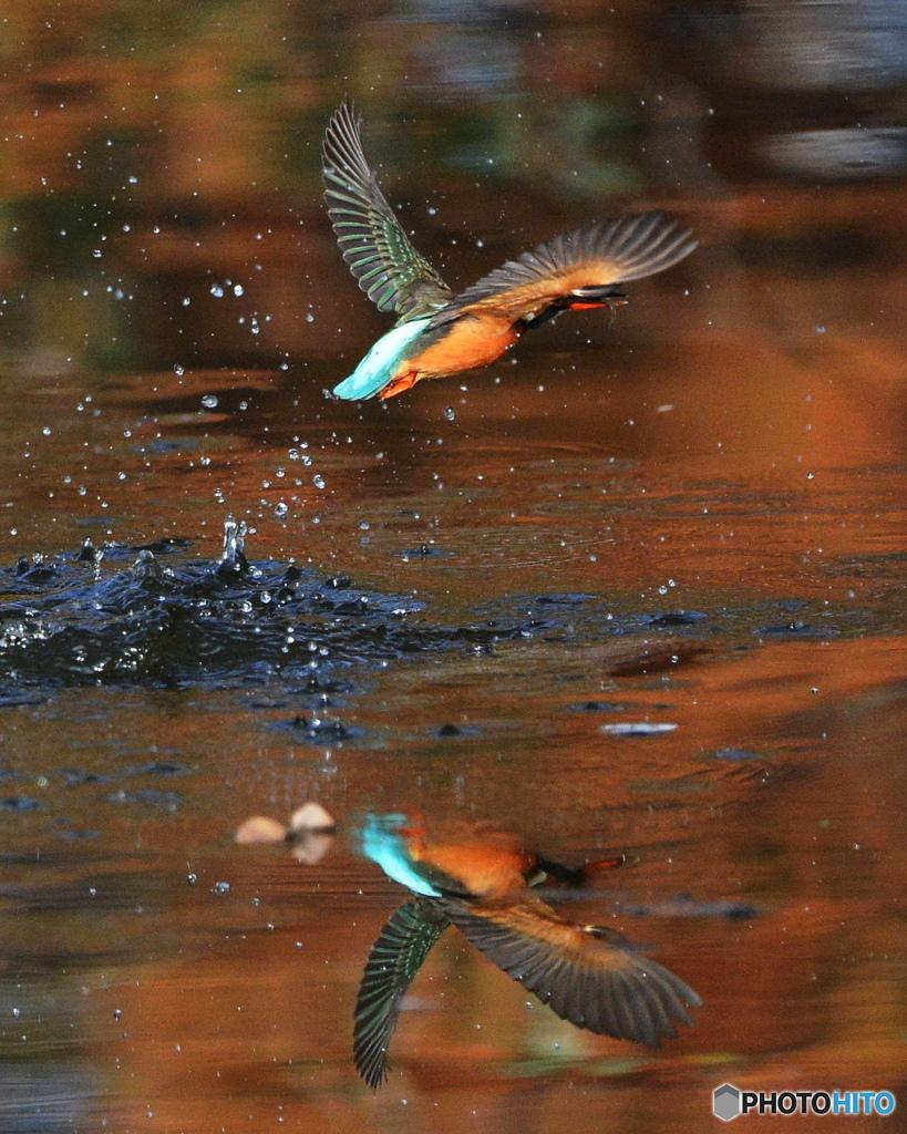 紅葉の水面2