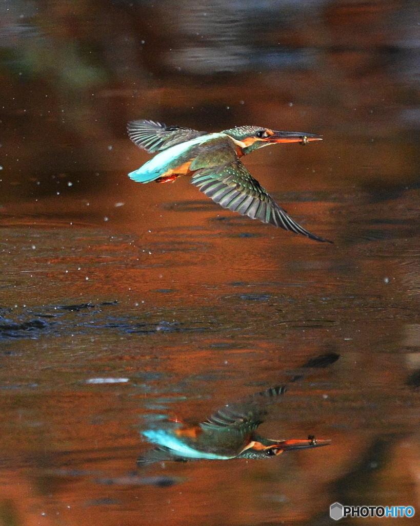 紅葉の水面3