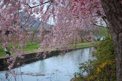 春のなごみ