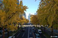 黄色の街路樹-2