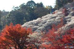 紅葉と四季桜Ⅰ