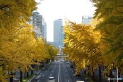 黄金の街路樹1