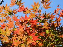 賑やかな秋