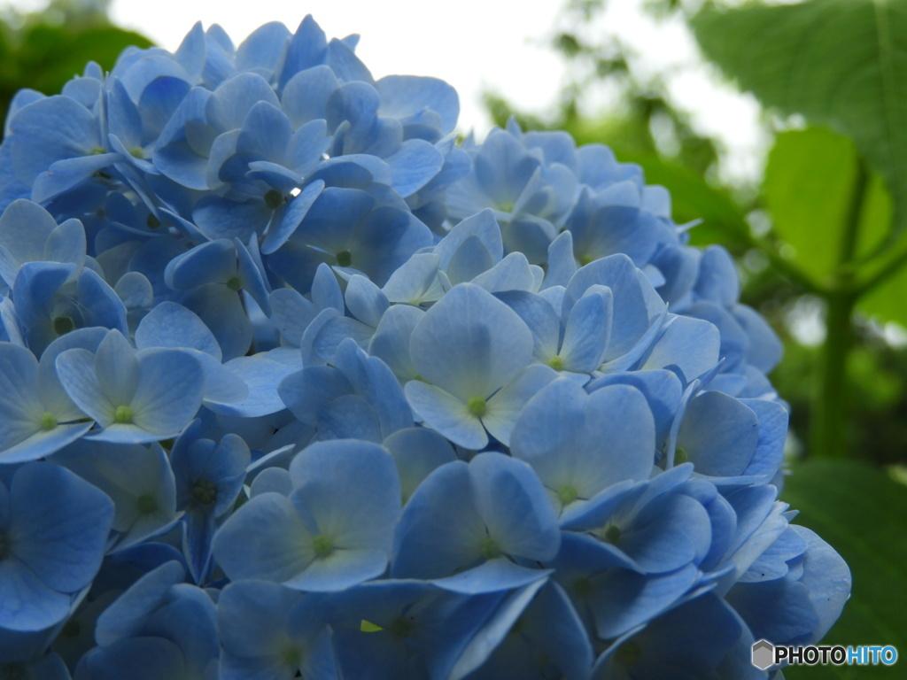 青いやすらぎ