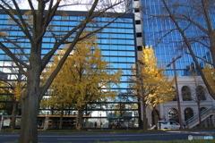 黄色の街路樹
