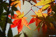のぞき見の秋