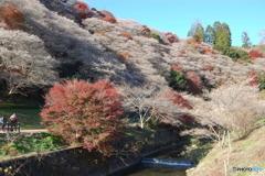 紅葉と四季桜Ⅲ