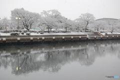 雪の朝-2