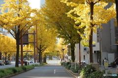 黄金の街路樹2