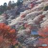 紅葉と四季桜Ⅱ