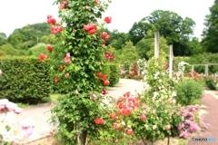薔薇の回廊