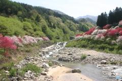 澄んだ川と青空と新緑と花桃
