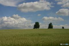 蕎麦と木立と空
