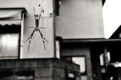 ほら見てごらん、壁に大きな蜘蛛がいるよ