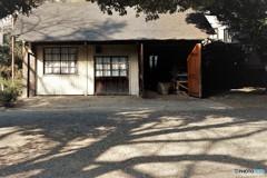 旧古河庭園2(秋から冬へ)