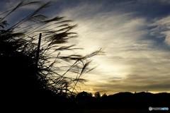 すすきと夕陽2