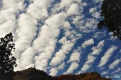 相倉1(雲)