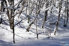 荘川冬景色1