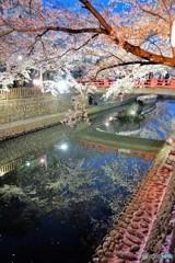 大垣夜桜2
