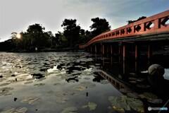 朝日のあたる橋