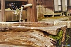 手洗い場と花