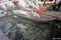 大垣夜桜1