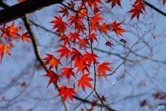 秋の終わり(蔵出し)