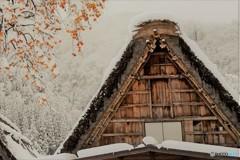 冬の始まり1