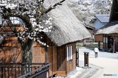 山村に春が来た1