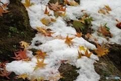 合掌集落11(雪とモミジ2)