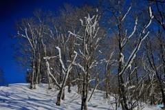 荘川冬景色2