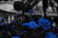 青の時間…