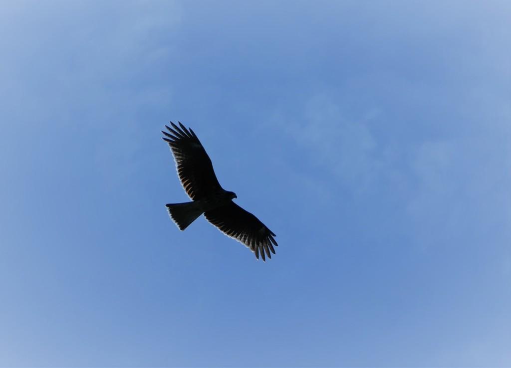 鳥3 飛ぶ鳥撮影再挑戦