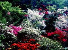 パレットのような庭園