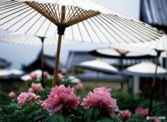 奈良当麻寺
