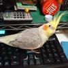 また新しいキーボード買ったの?